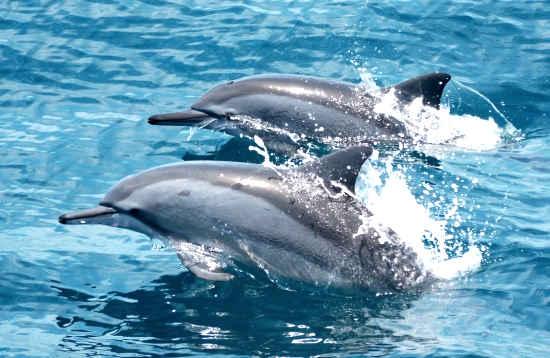 Mini Delfin Tour Puerto del Carmen Lanzarote