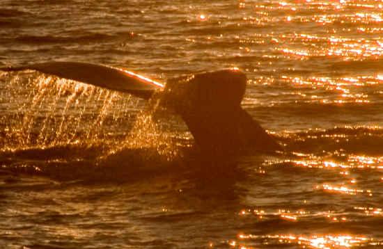 Bootstour Delfine & Sonnenuntergang Lanzarote